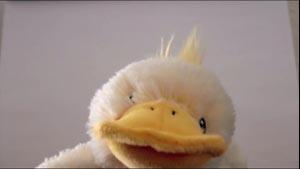 Duck's Crime (48s)
